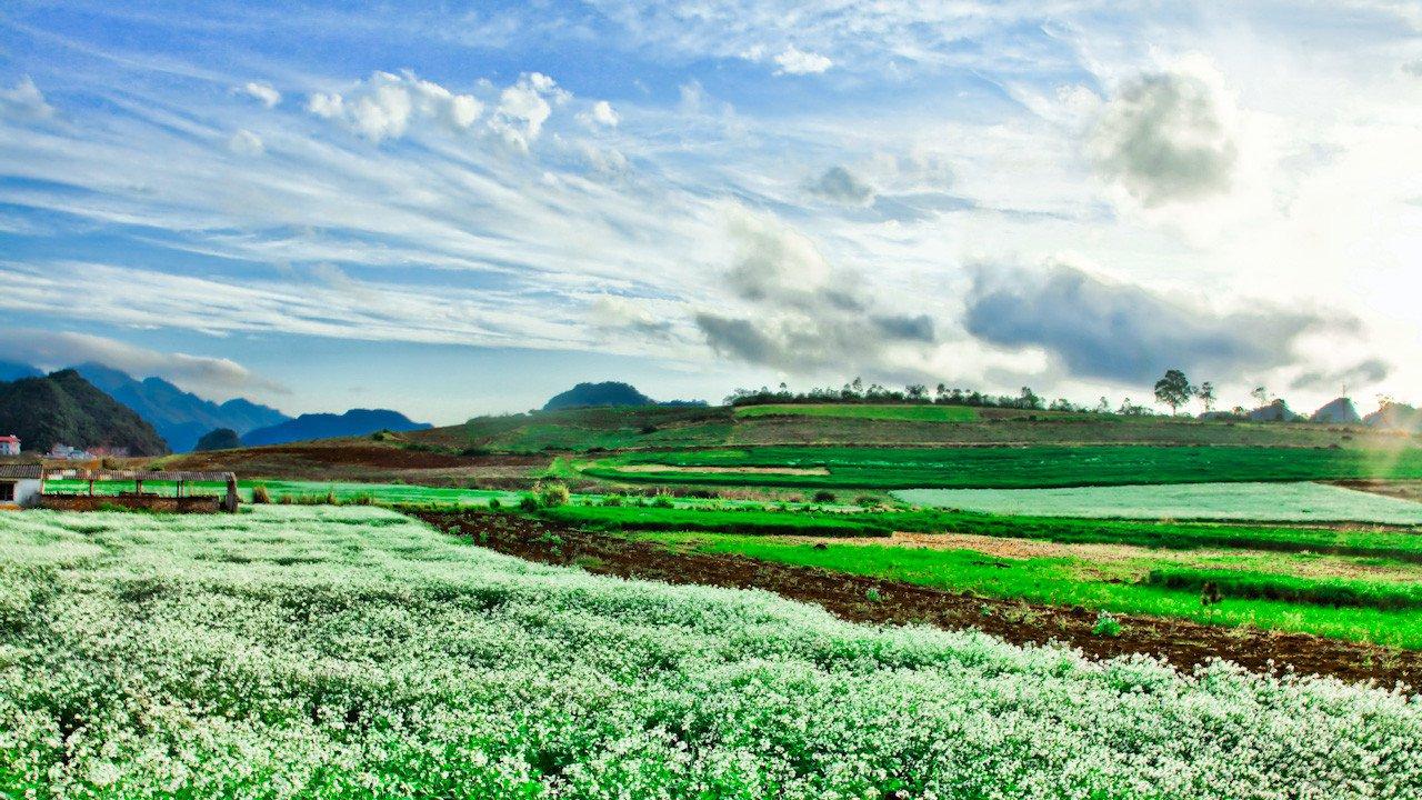 Kết quả hình ảnh cho Mai Châu mau fnaof đẹp