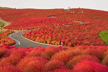 Mùa thu ở công viên Hitachi